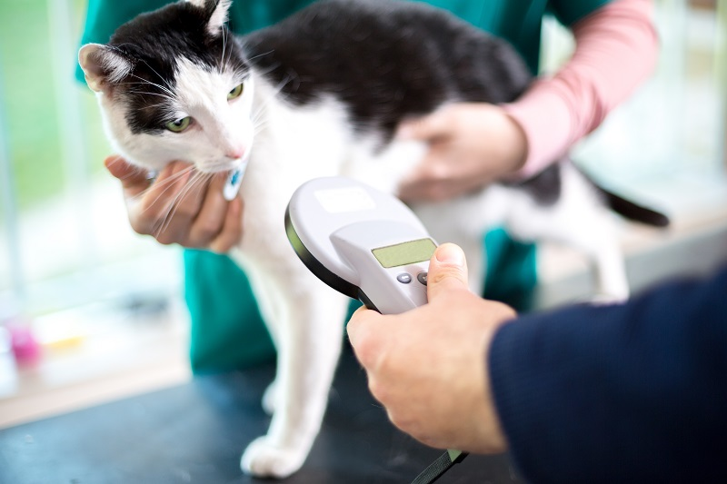Microchipping in Pennsburg, PA